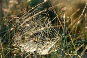 spider-web-1599470_1280